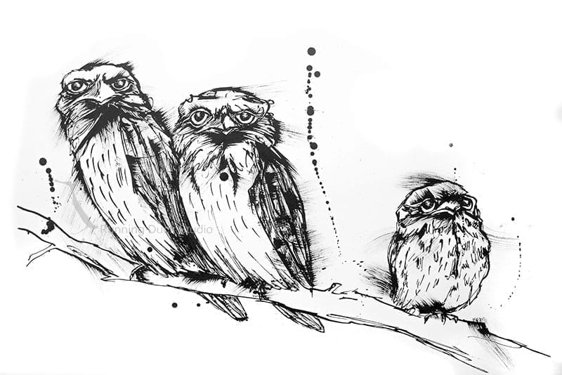 Running Duck Studio Ink Gallery - Wildlife artwork of tawny Frog-mouths