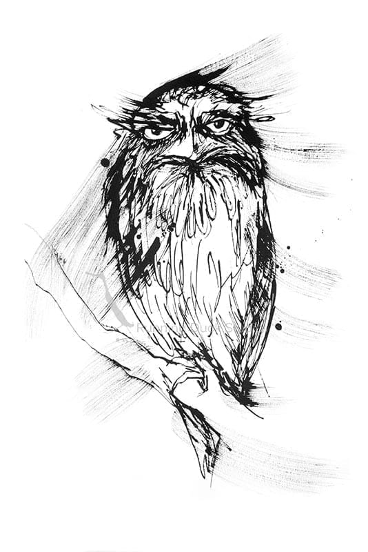 Running Duck Studio Ink Gallery - Tawny Frogmouth artwork by Running Duck Studio