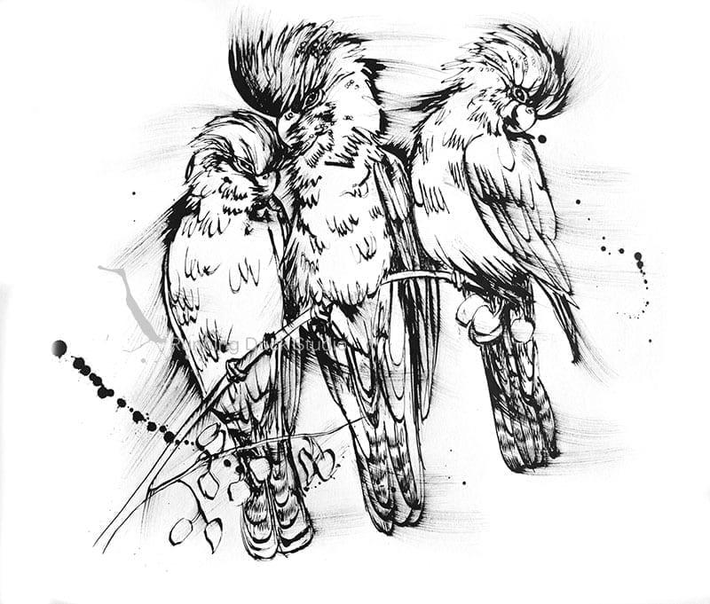 Running Duck Studio Ink Gallery - Ink Drawing of 3 Black Cockatoos