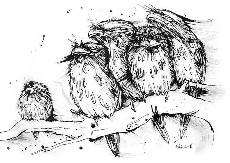 Painting of Tawny Frog-mouth birds