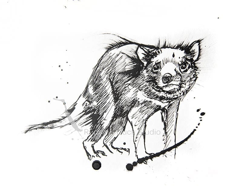 drawing of Tasmanian Devil