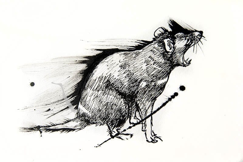 ink artwork of a Tasmanian Devil crying out