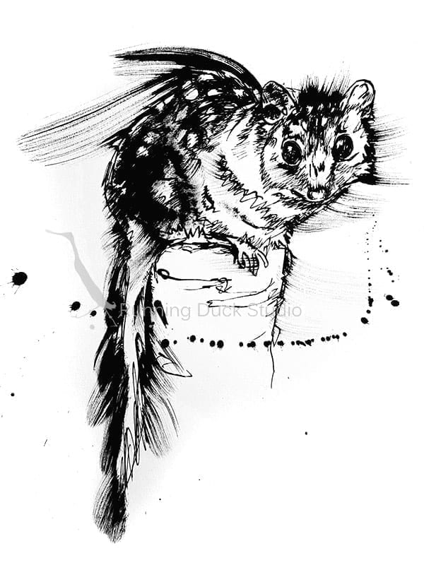 Australian Wildlife artwork, eastern quoll