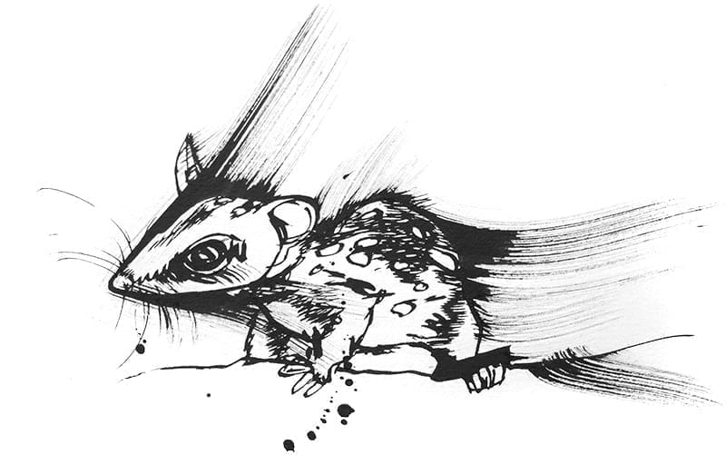 baby quoll drawing