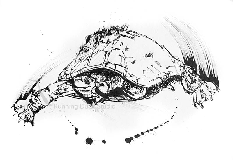 Artwork of Mary River Turtle