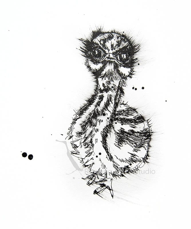 Australian Baby Emu Wildlife artwork of an Emu