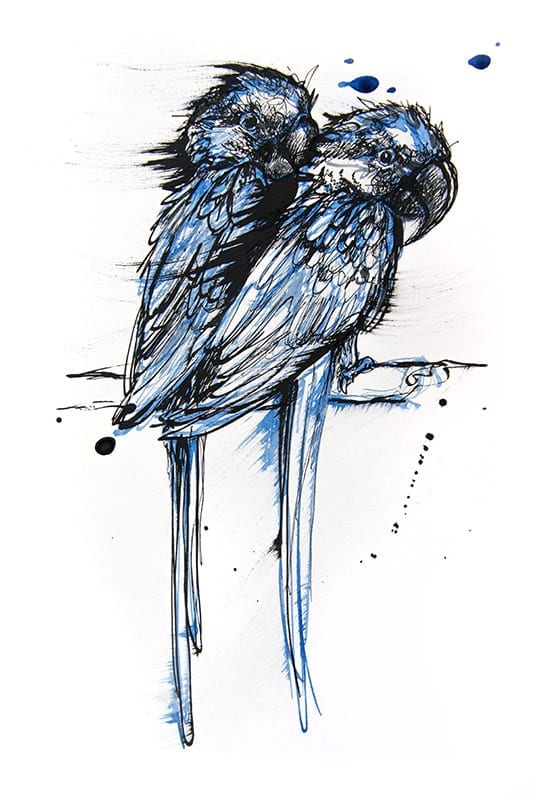 Blue drawing of 2 Macaw birds
