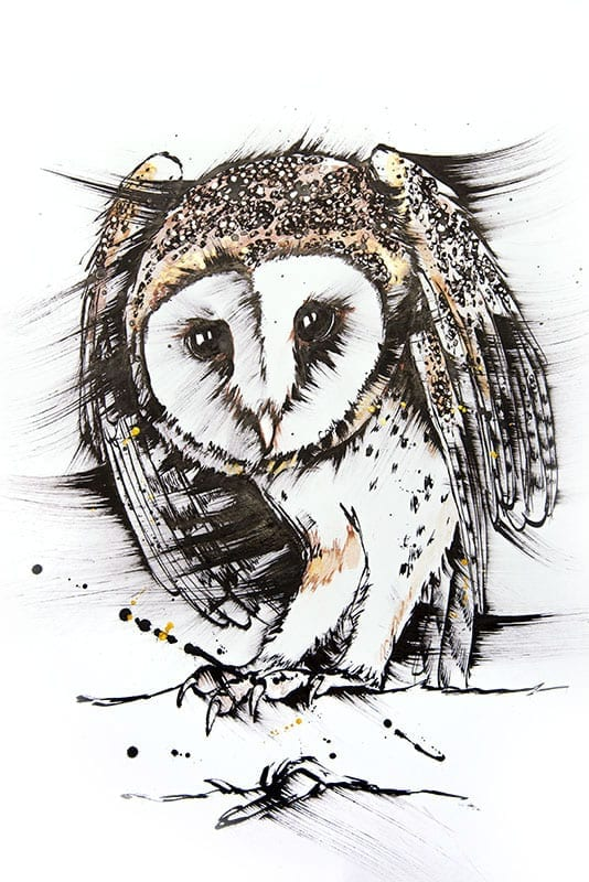drawing of an beautiful owl